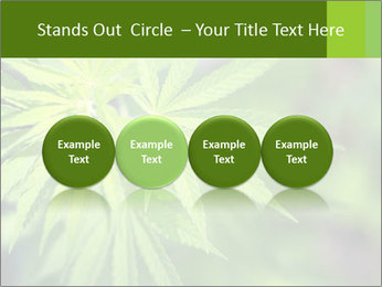 Young cannabis PowerPoint Template - Slide 76