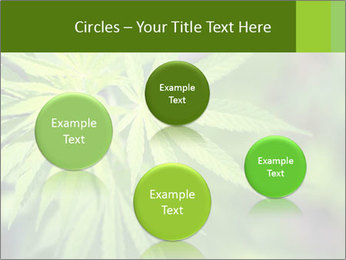 Young cannabis PowerPoint Templates - Slide 77