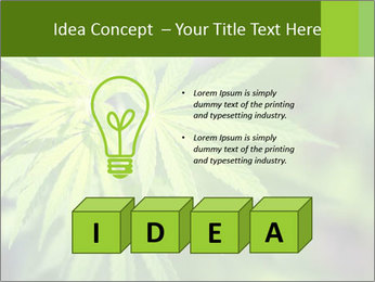 Young cannabis PowerPoint Template - Slide 80