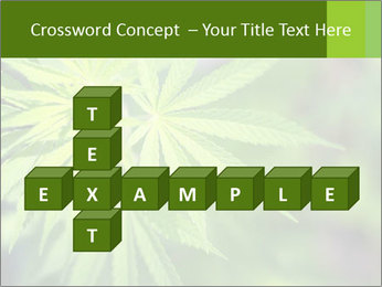 Young cannabis PowerPoint Template - Slide 82