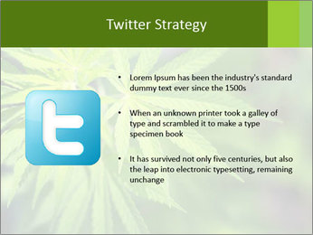 Young cannabis PowerPoint Template - Slide 9