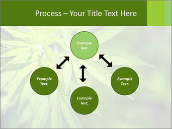 Young cannabis PowerPoint Template - Slide 91