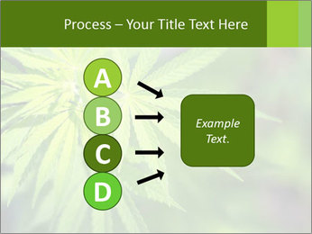 Young cannabis PowerPoint Template - Slide 94