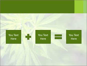 Young cannabis PowerPoint Template - Slide 95