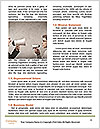 0000087291 Word Templates - Page 4