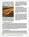 0000087314 Word Templates - Page 4