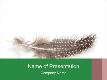 Feather of a bird PowerPoint Templates
