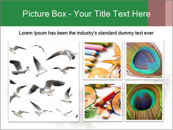 Feather of a bird PowerPoint Templates - Slide 19