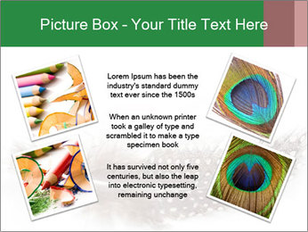 Feather of a bird PowerPoint Templates - Slide 24