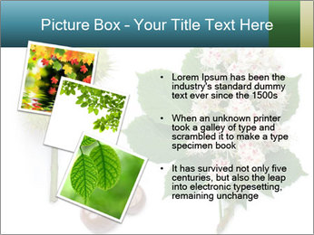 Horse-chestnut PowerPoint Templates - Slide 17