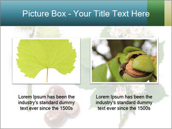 Horse-chestnut PowerPoint Templates - Slide 18