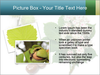 Horse-chestnut PowerPoint Templates - Slide 20