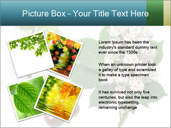 Horse-chestnut PowerPoint Templates - Slide 23