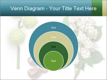 Horse-chestnut PowerPoint Templates - Slide 34