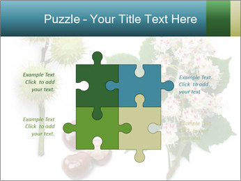 Horse-chestnut PowerPoint Templates - Slide 43