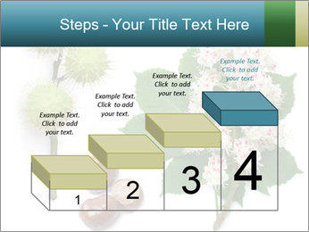 Horse-chestnut PowerPoint Templates - Slide 64