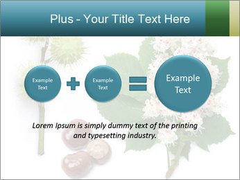 Horse-chestnut PowerPoint Templates - Slide 75