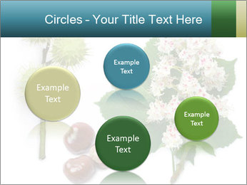 Horse-chestnut PowerPoint Templates - Slide 77