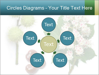 Horse-chestnut PowerPoint Templates - Slide 78
