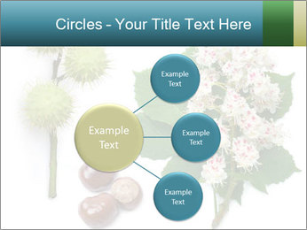 Horse-chestnut PowerPoint Templates - Slide 79