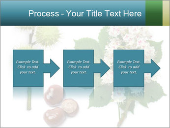 Horse-chestnut PowerPoint Templates - Slide 88