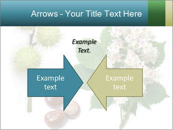 Horse-chestnut PowerPoint Templates - Slide 90