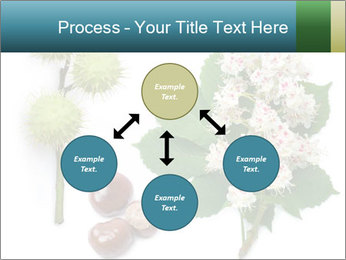 Horse-chestnut PowerPoint Templates - Slide 91