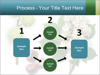 Horse-chestnut PowerPoint Templates - Slide 92