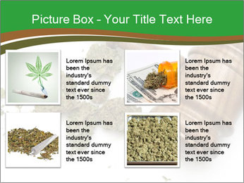 Marijuana PowerPoint Template - Slide 14