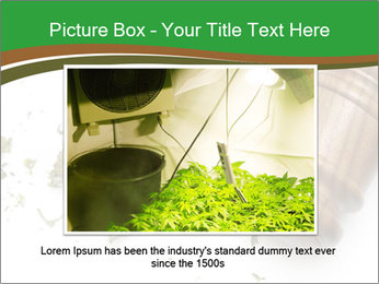 Marijuana PowerPoint Template - Slide 16