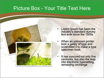 Marijuana PowerPoint Templates - Slide 20