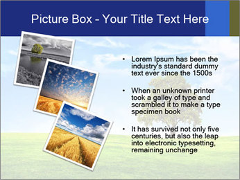 Tree and blue sky PowerPoint Template - Slide 17