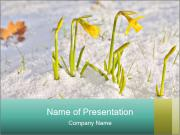 Bunch of yellow spring PowerPoint Template