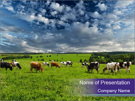 Cows grazing PowerPoint Templates