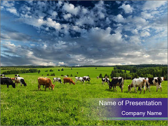 Cows grazing PowerPoint Templates - Slide 1
