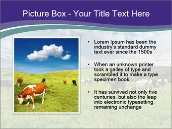 Cows grazing PowerPoint Templates - Slide 13