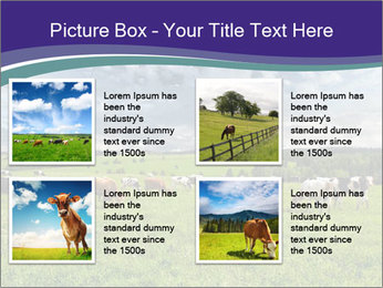 Cows grazing PowerPoint Templates - Slide 14