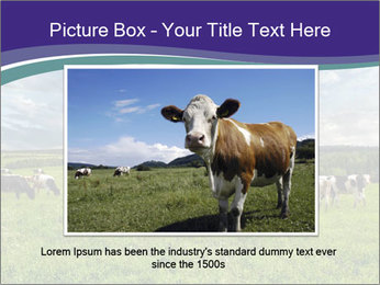 Cows grazing PowerPoint Templates - Slide 16