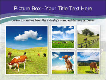 Cows grazing PowerPoint Templates - Slide 19