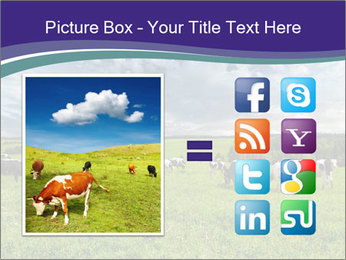 Cows grazing PowerPoint Templates - Slide 21