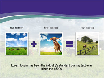 Cows grazing PowerPoint Templates - Slide 22
