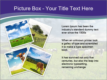 Cows grazing PowerPoint Templates - Slide 23