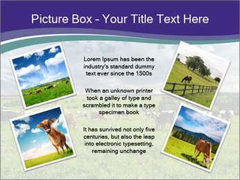 Cows grazing PowerPoint Templates - Slide 24