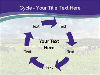 Cows grazing PowerPoint Templates - Slide 62
