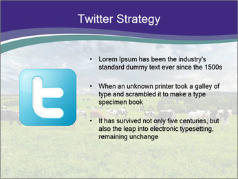 Cows grazing PowerPoint Templates - Slide 9