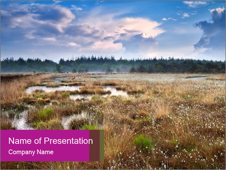 Puffy cotton-grass PowerPoint Template