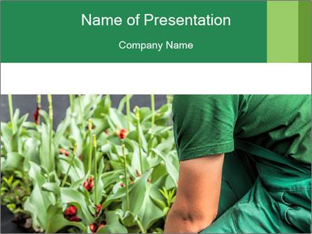 Horticulturist installs PowerPoint Template