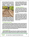 0000087441 Word Template - Page 4