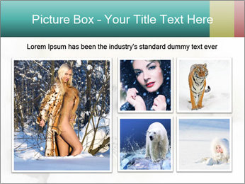 Baby harp seal pup PowerPoint Templates - Slide 19