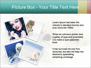 Baby harp seal pup PowerPoint Template - Slide 23